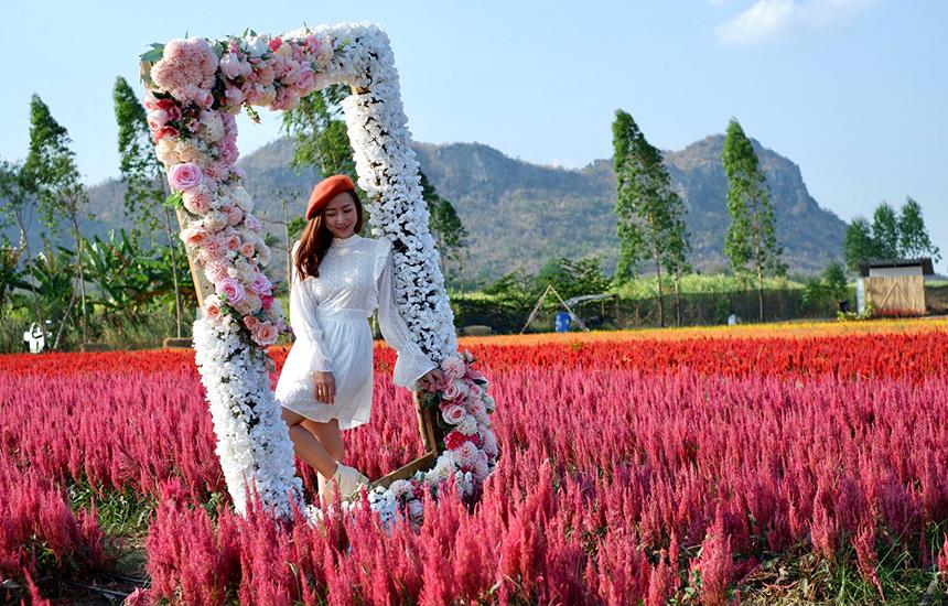 สวน Enjoy Flowers by Anon