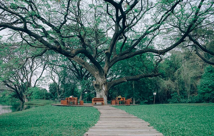 ต้นไม้เยอะ เดินถ่ายรูปเล่นเพลินๆ3