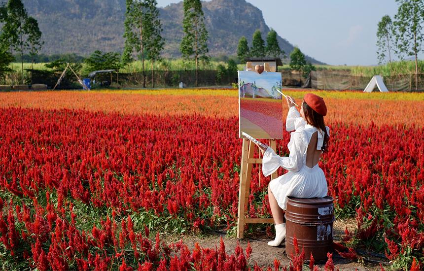 ทุ่งดอกซีโลเซีย สวนดอกไม้แห่งใหม่ที่กาญจนบุรี Enjoy Flowers by Anon ดอกจริงไม่ใช้สแตนอิน สวนสวย พร็อพแน่น! โลเคชั่นดีงามฟีลต่างประเทศ