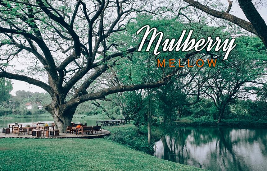 Mulberry Mellow มัลเบอร์รี่เมลโล่ คาเฟ่เมืองกาญที่ใครมาต้องหลงรัก เครื่องดื่มดี ขนมดี บรรยากาศร่มรื่น ชวนให้นั่งชิลได้ตลอดวัน